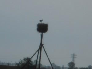 Og der var en stork der